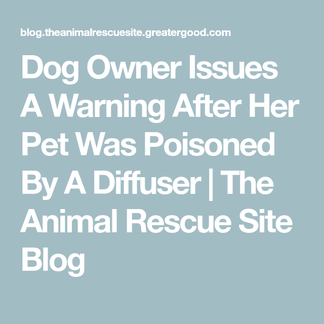 Dog Owner Issues A Warning After Her Pet Was Poisoned By A Diffuser