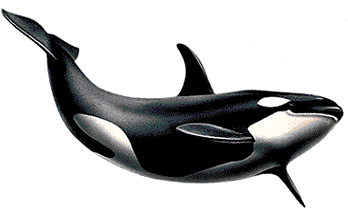 Killerwhale Png By Lg Design On Deviantart Whale Orca Art Clipart