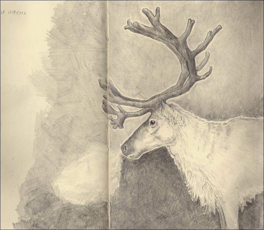 Reindeer by dana-redde on DeviantArt