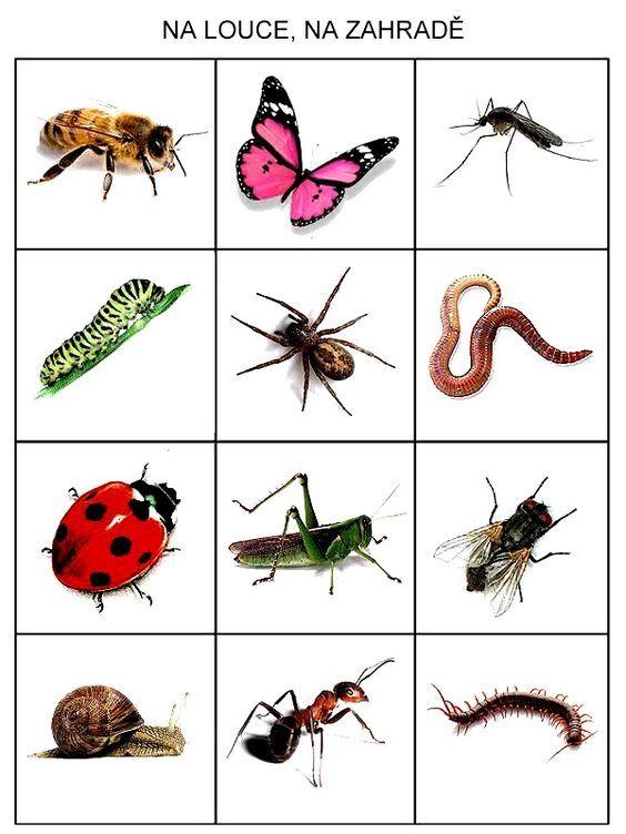 Pingl par ka sur ivot v tr v pinterest insectes maternelle et cole - Reconnaitre les insectes xylophages ...