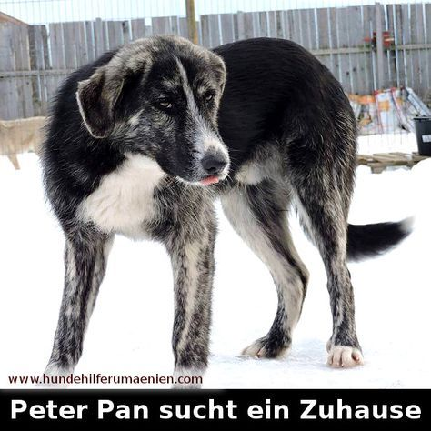 Peter Pan adoptiert Hunde vermittlung, Hunde in not