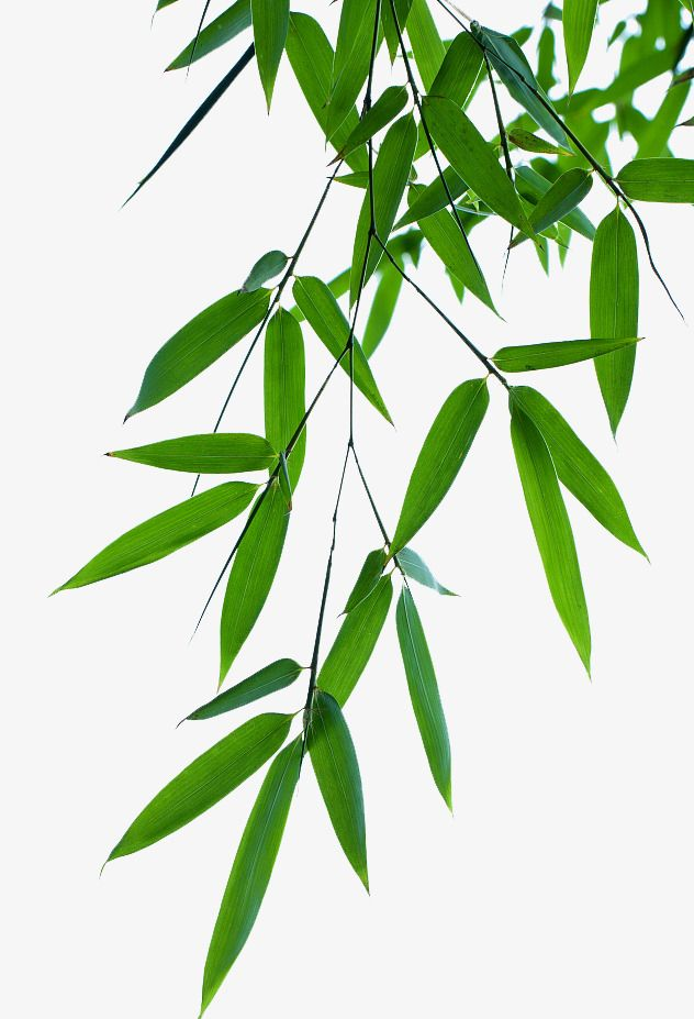 Bamboo Leaves Effect Bamboo Leaves Blue Map Leaf Bamboo Png Image Bamboo Leaves Bamboo Art Leaves