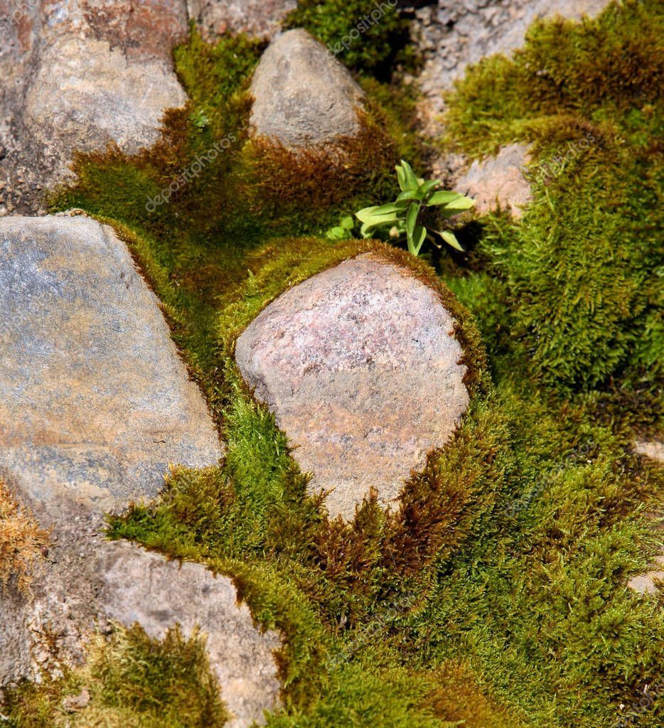 Old Mossy Stones Close  Stock Photo