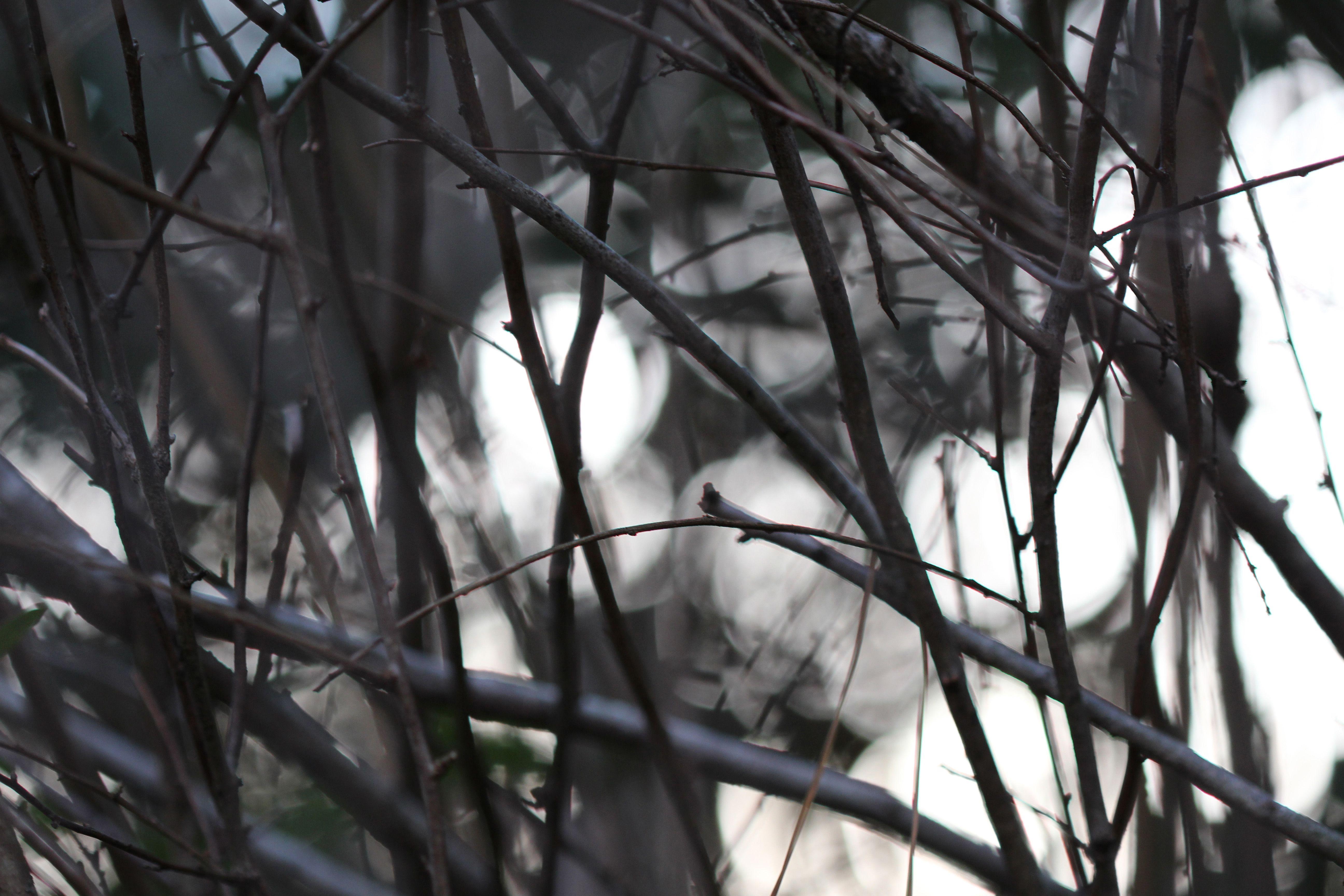Winter Light Canon Rebel T5i EF100mm f/2.8 lens f/2.8 1/125