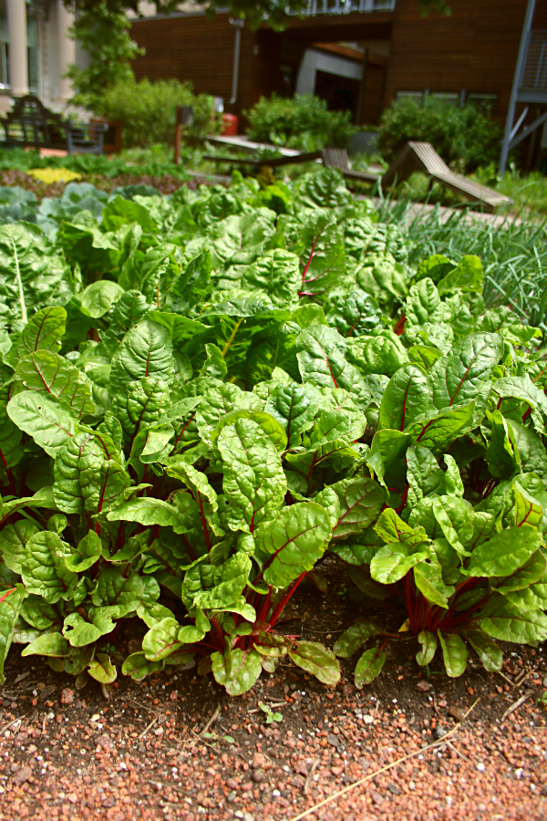 Fall Vegetable Gardening What to Plant in September