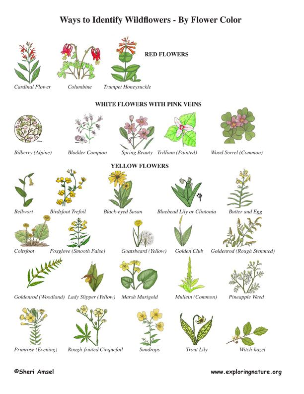 Wildflower Identification By Color Wildflower Id Book