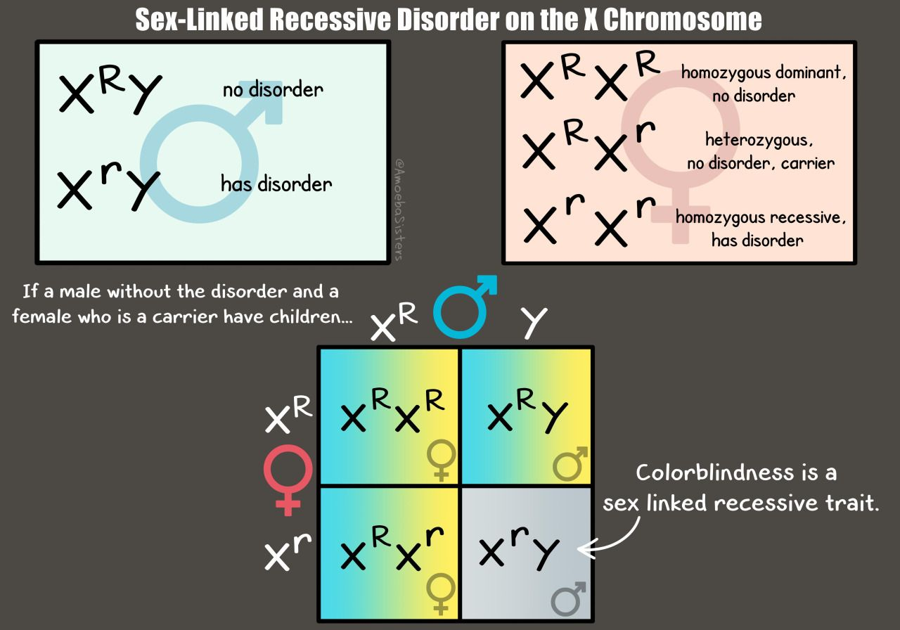 Our Genetics Graphic Showing An Example Of Recessive