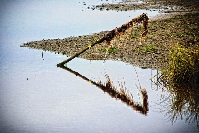 Natural Triangles Nature Triangle Art Image