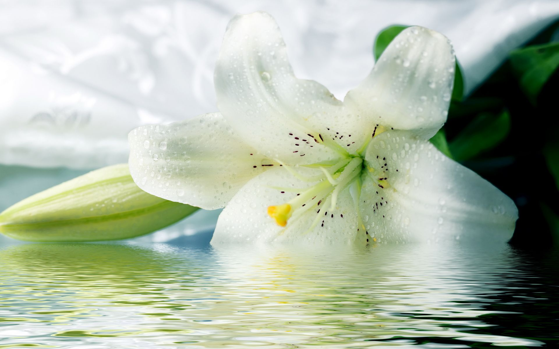 Lilies flowers pinterest lily pictures flowers and white gardens white lilly my favorite flower izmirmasajfo Images