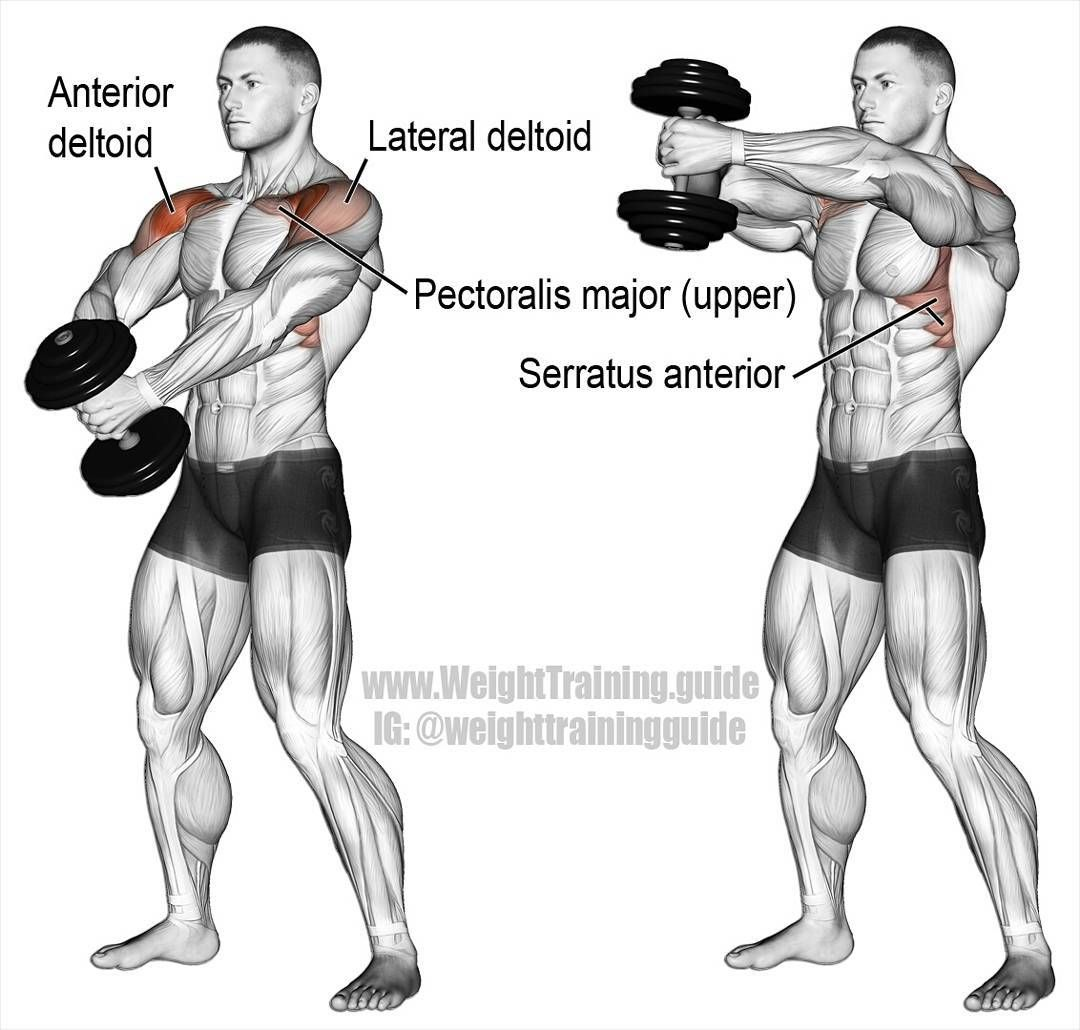 Single dumbbell front hammer raise. An auxiliary exercise that targets your anterior deltoid. Your lateral deltoid, clavicular (upper) pectoralis major, serratus anterior, and middle and lower trapezius act as synergists. Grasp one dumbbell with both hands using a neutral grip (palms facing inward). Keeping your back and wrists straight, and your elbows slightly bent, raise the dumbbell until your upper arms are above horizontal, lower the dumbbell to the starting position, and repeat. ☺ Check #exercisesforupperback