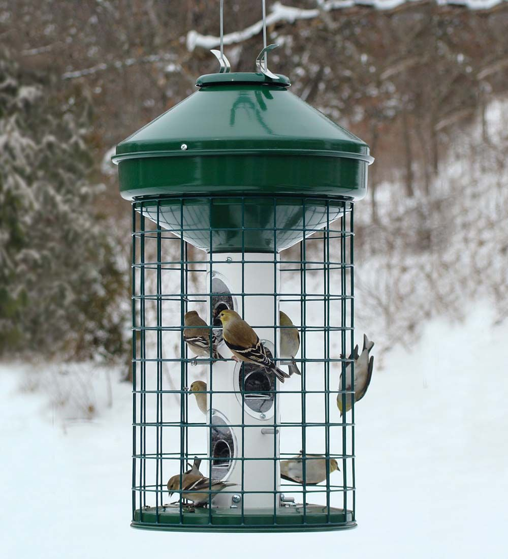 SquirrelResistant Caged Tube Bird Feeder Bird Feeders