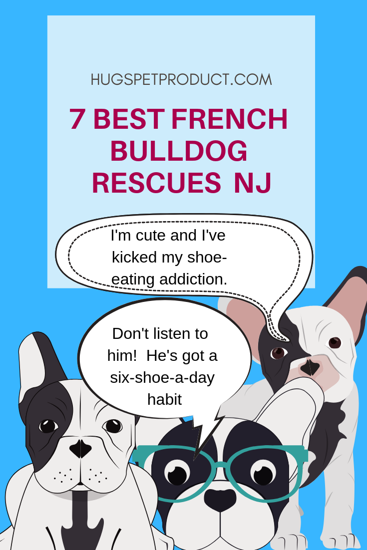7 Best French Bulldog Rescues Nj Your Dogs Health Matters