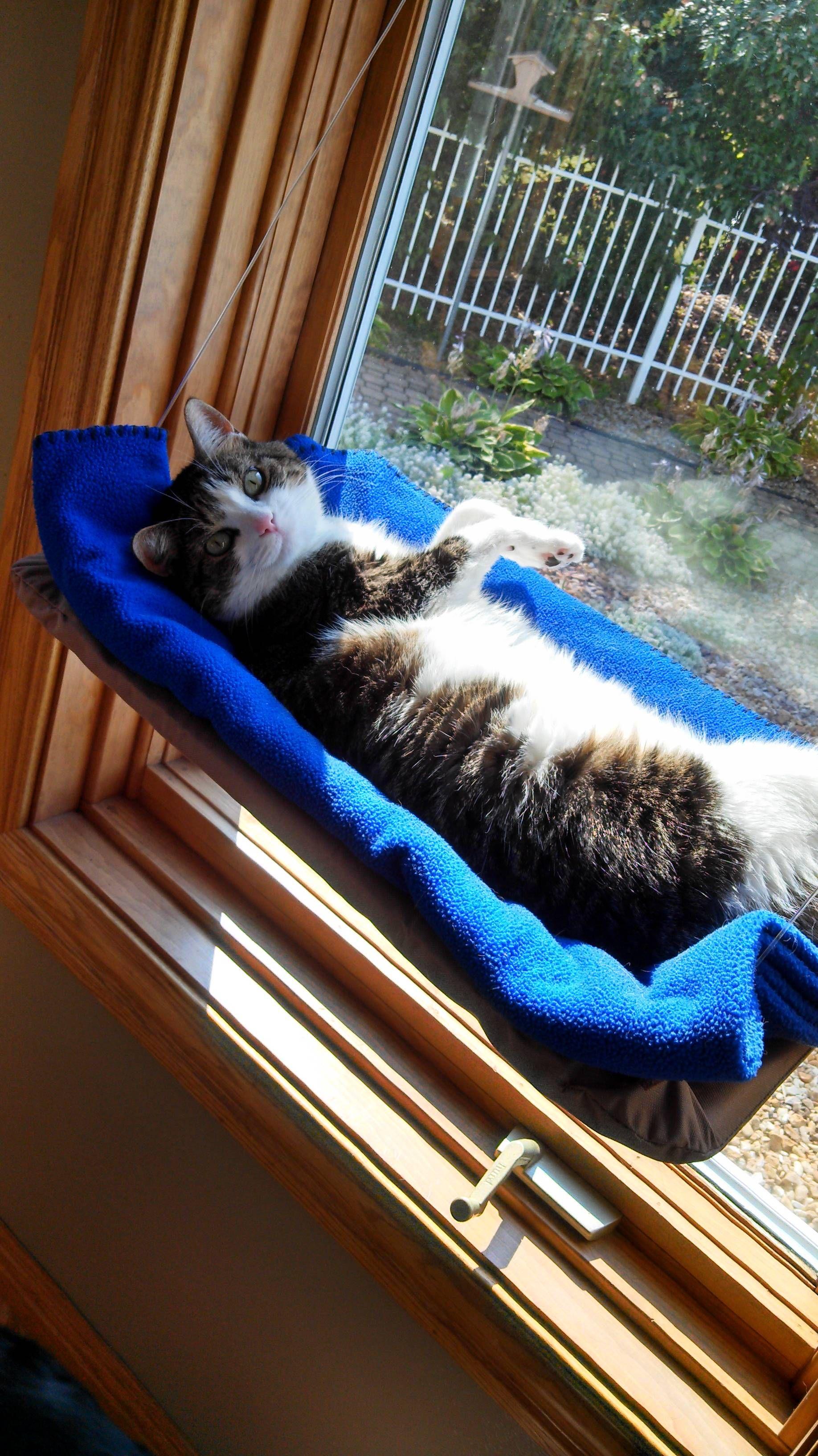 cat hammock  enough said  diy cat hammockdog hammock for carkitty     cat hammock  enough said    cat hammock cat and animal  rh   pinterest