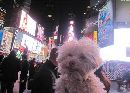 Chú chó 14 tuổi đi du lịch vòng quanh thế giới