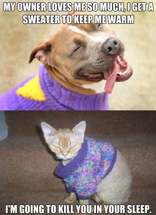 How Pets React To Sweaters Funny Animals Cute Animals Funny Animals With Captions