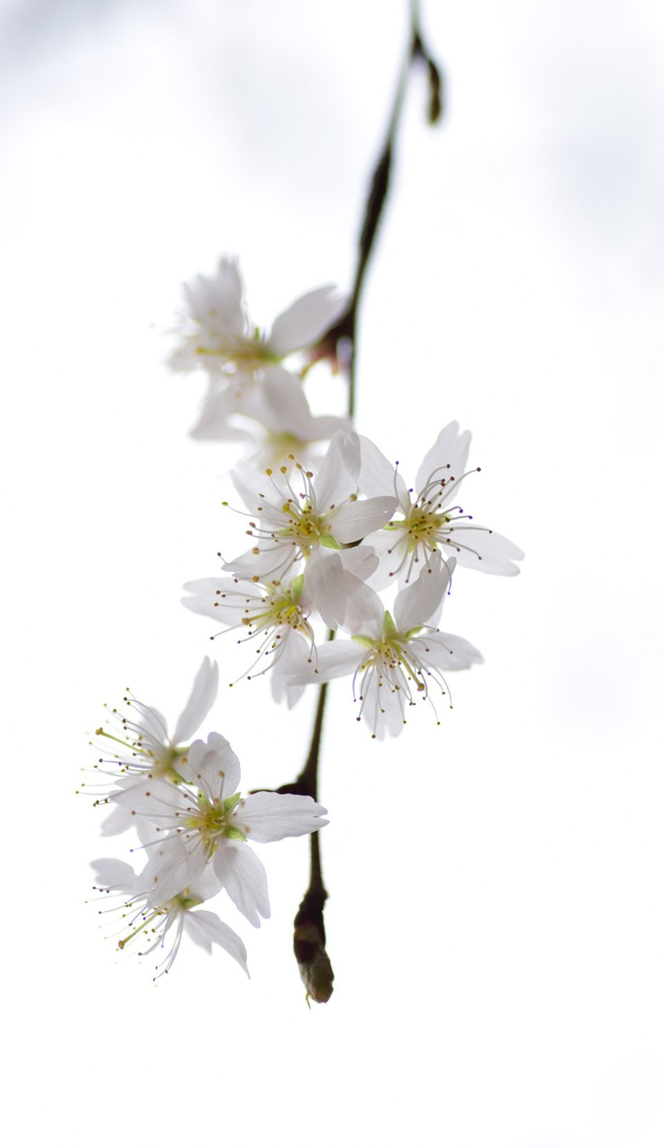 White Flower Whats The Name Flowers Pinterest What S