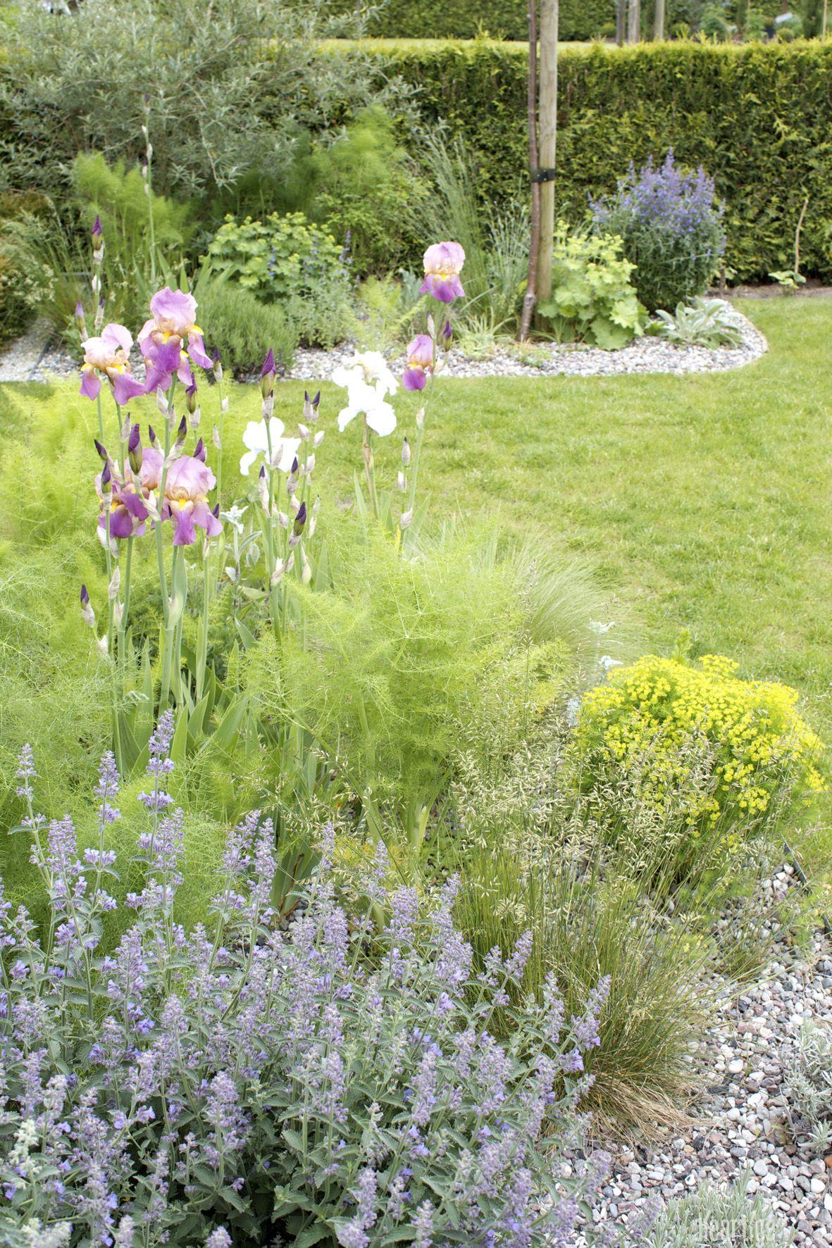 Dieartigeblog Garten Schwertlilien Fenchel Katzenminze Graser Zypressenwolfsmilch Im Hintergrund Frauenmantel Garten Bepflanzung Garten Ideen