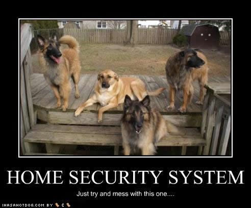 German Shepherds Indeed The Best Home Security System Home Security Pet Security Best Home Security System