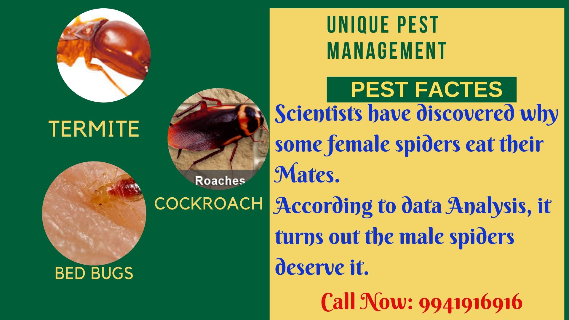 Pin by Kiruthikashety on unique pest control Bed bugs