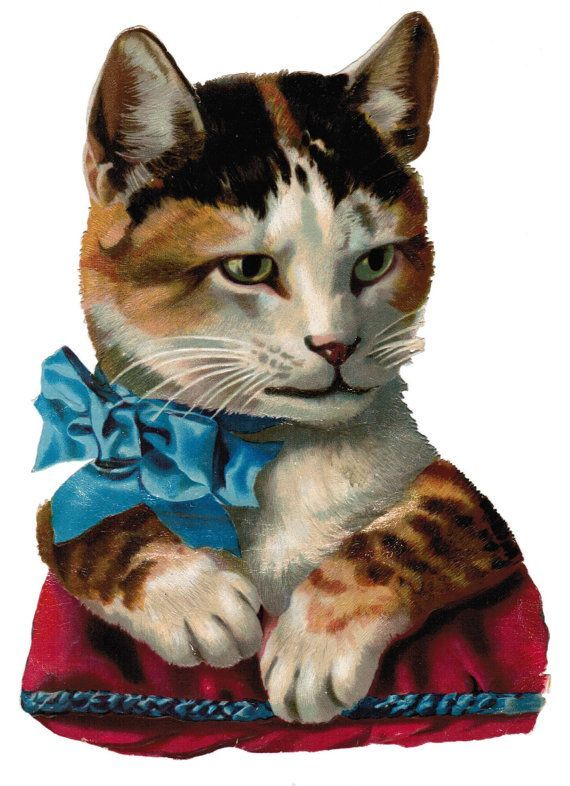 Victorian Kittens Google Search Vintage Cat Cats Cats And Kittens