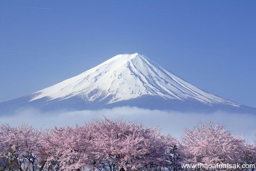 صور الطبيعة الخلابة بمناسبة دخول فصل الربيع Cherry Blossom Cherry Blossom Japan Cherry Blossom Season