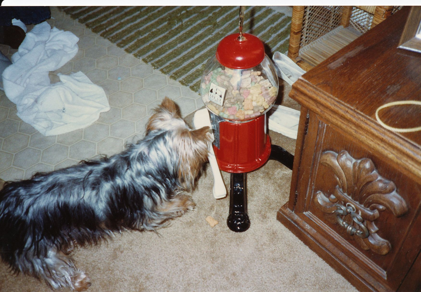 Taxi had her own treat machine.  She would push down on the bone and a treat would come out.