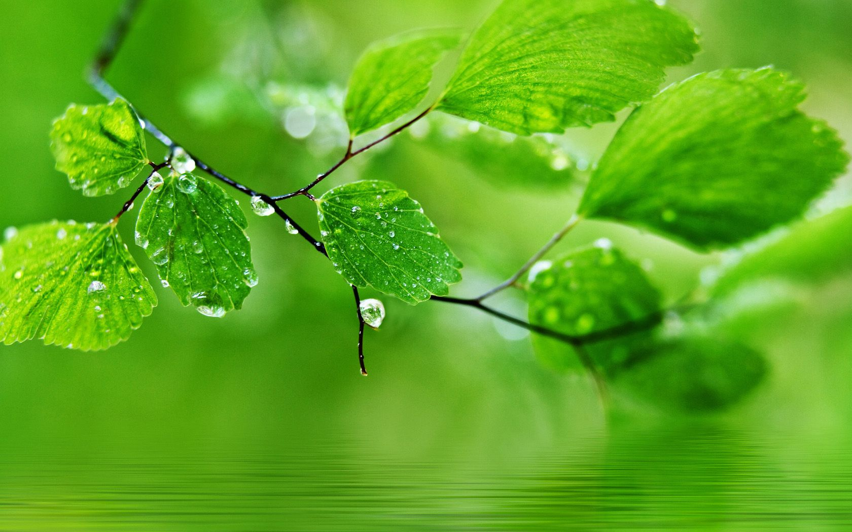 beauty green natural wallpapers hd - http://wallawy/beauty-green