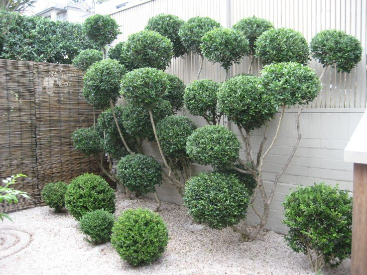 Elegant Shrub Topiary Garden Garden Shrubs Plants