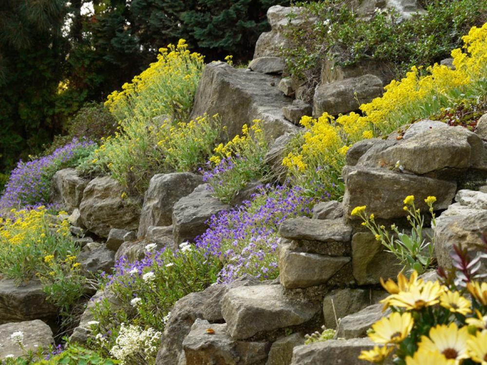 Steingarten - Planen, Anlegen und Tipps Herbs, Flowers and Gardens - pflegeleichter garten anlegen