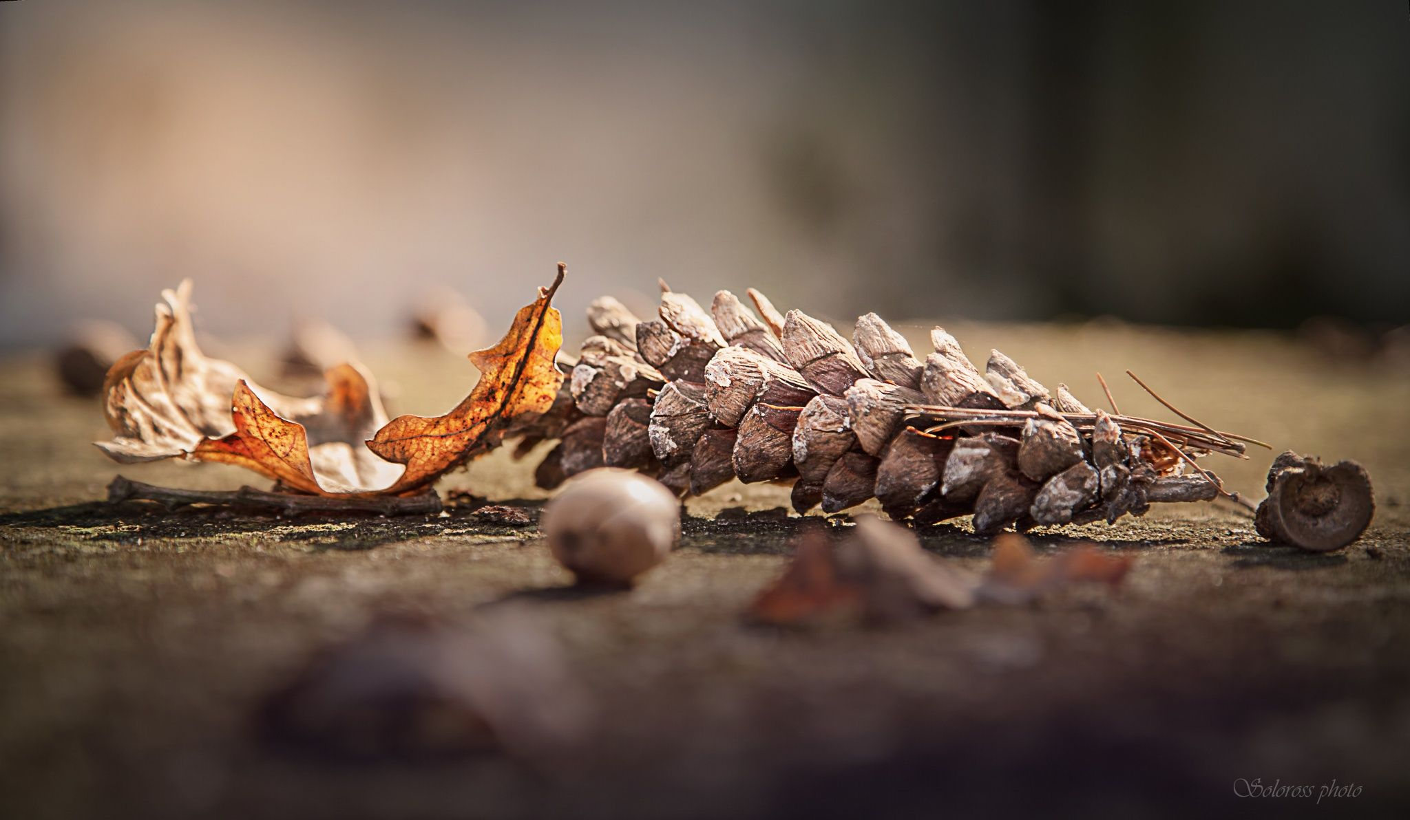 Photo Autunno by Rossella Paderno  on 500px
