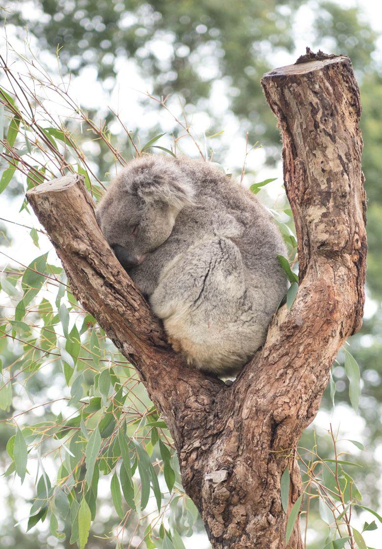 G'day Mate! Meeting Australia's Wildlife at Moonlit