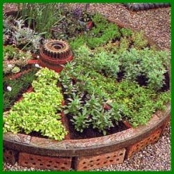 Kräutergarten in Kleinbereiche unterteilt