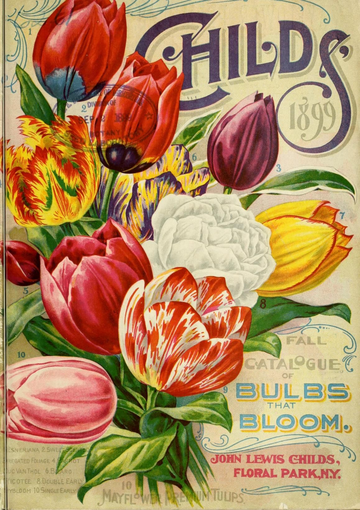 Childs fall catalogue of bulbs that bloom biodiversity