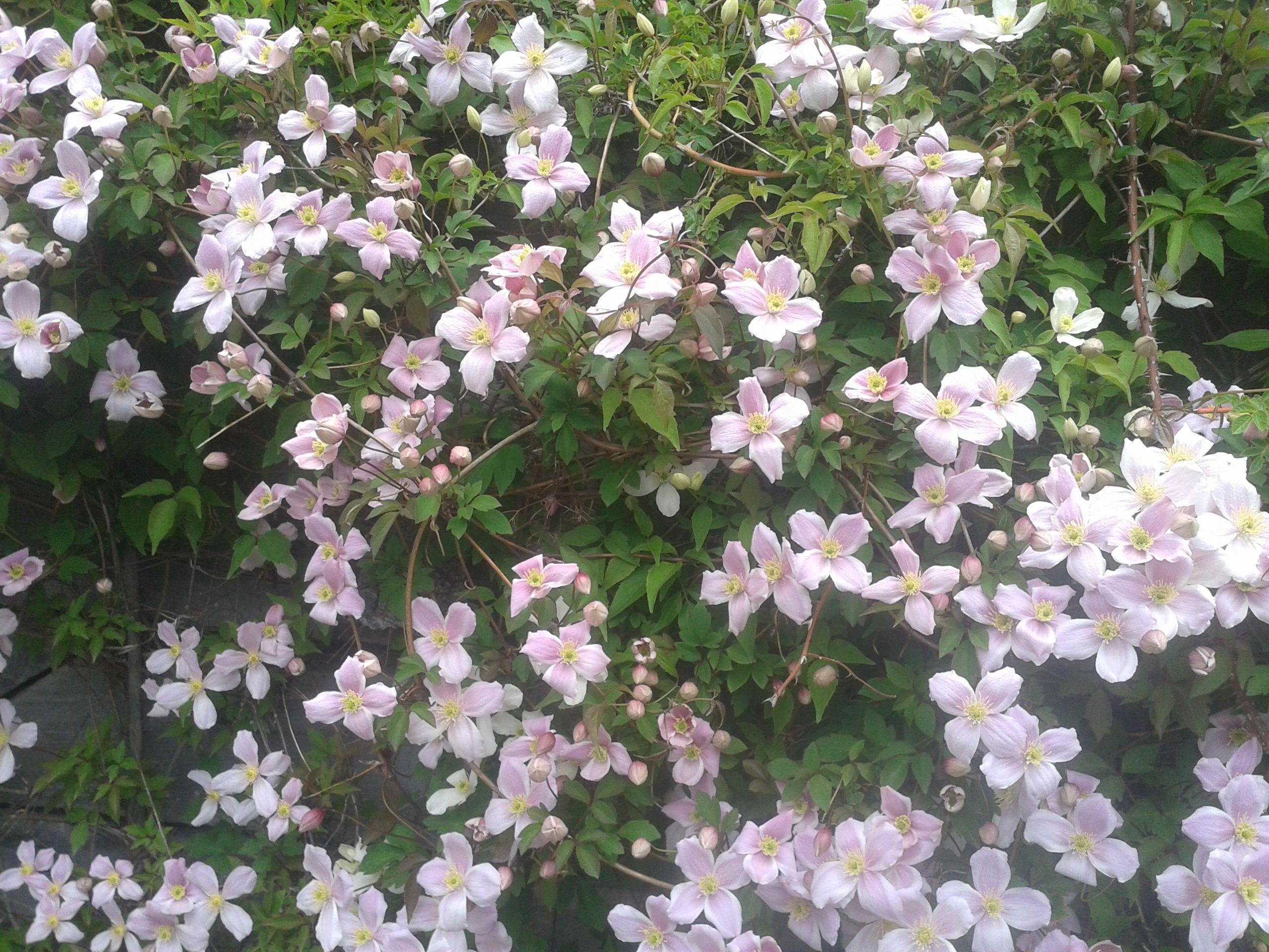 Flores de nuestro bosque