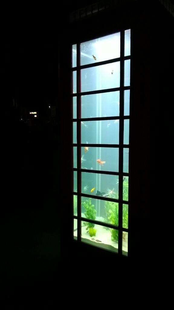 Lumiere light festival 2013: aquarium phone box