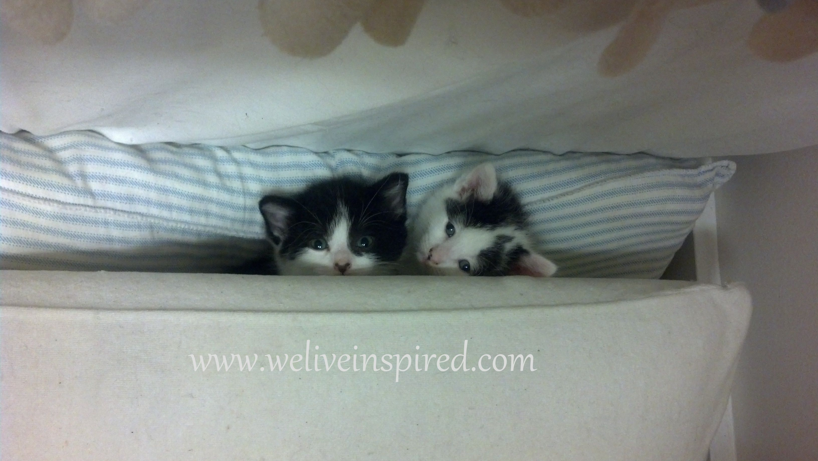 Seeking Comfort We Live Inspired Newborn Kittens 1 Month Olds Kitten Proofing