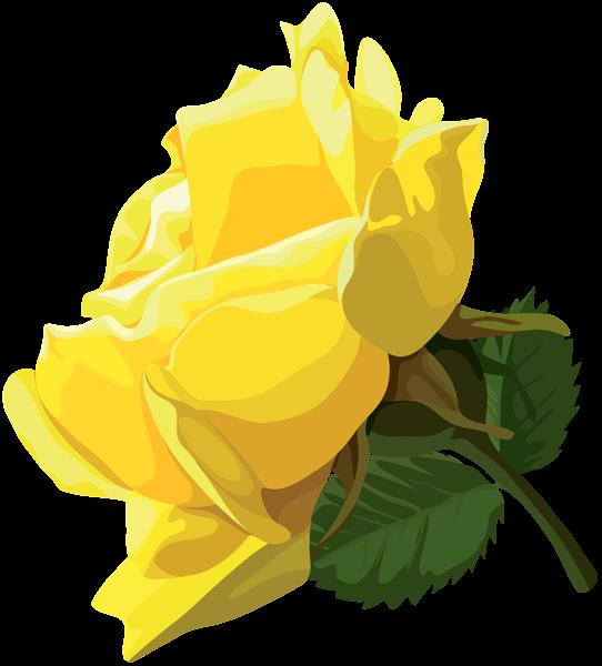 Yellow Rose Png Clip Art Art Yellow Roses Clip Art