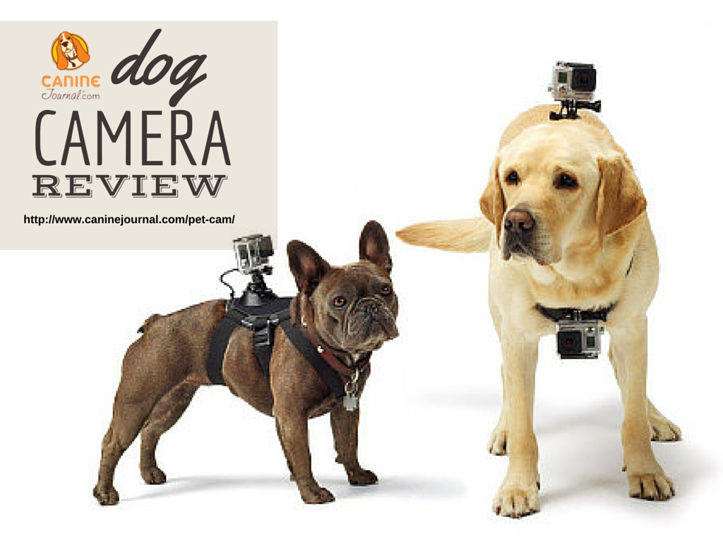Pup Arazzi Best Dog Cameras Pawbo Vs Petzi Vs Petcube Vs Petchatz Vs Furbo More Dogs Pets Pet Dogs