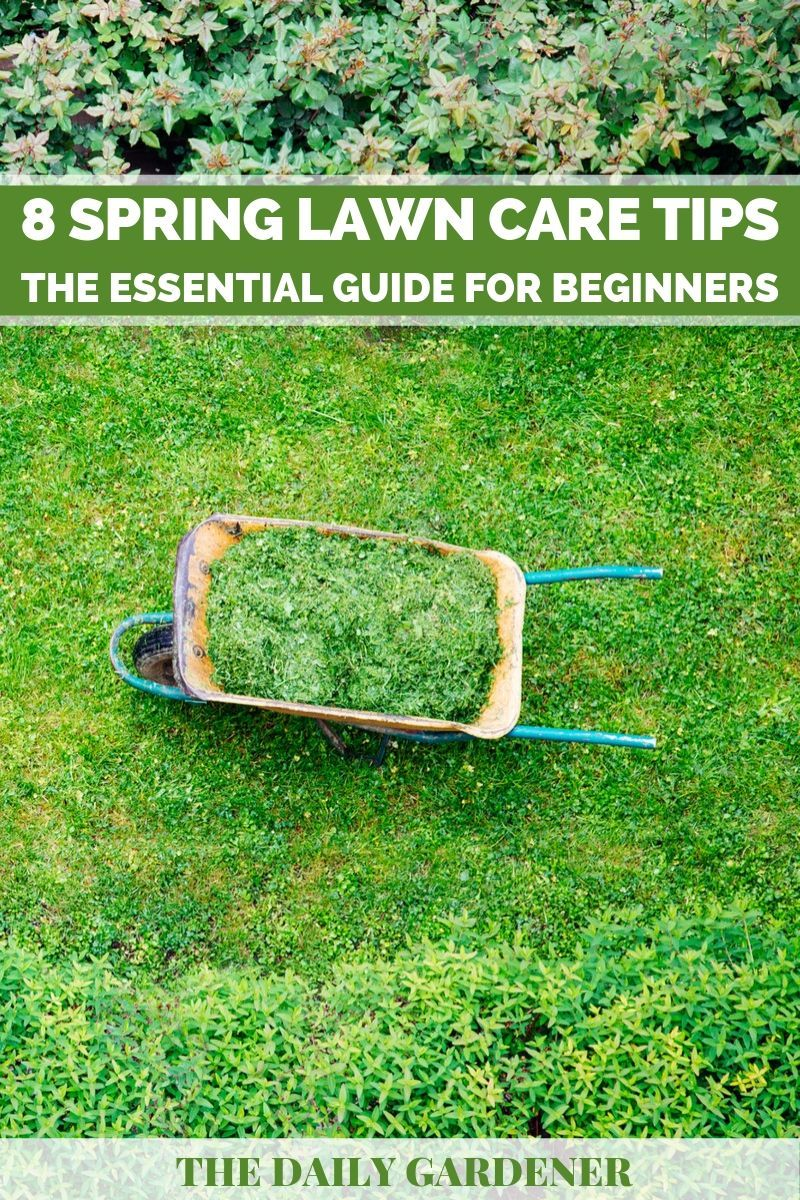 8 Spring Lawn Care Tips: The Essential Guide for Beginners - The Daily Gardener