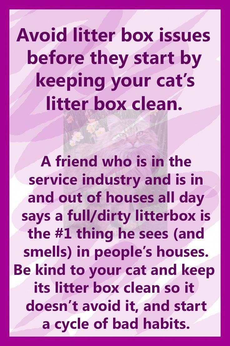 I share all of my tips and tricks to keeping cats and dogs