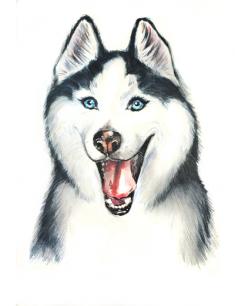 Необычные гибриды собак / Питомцы | 306x235