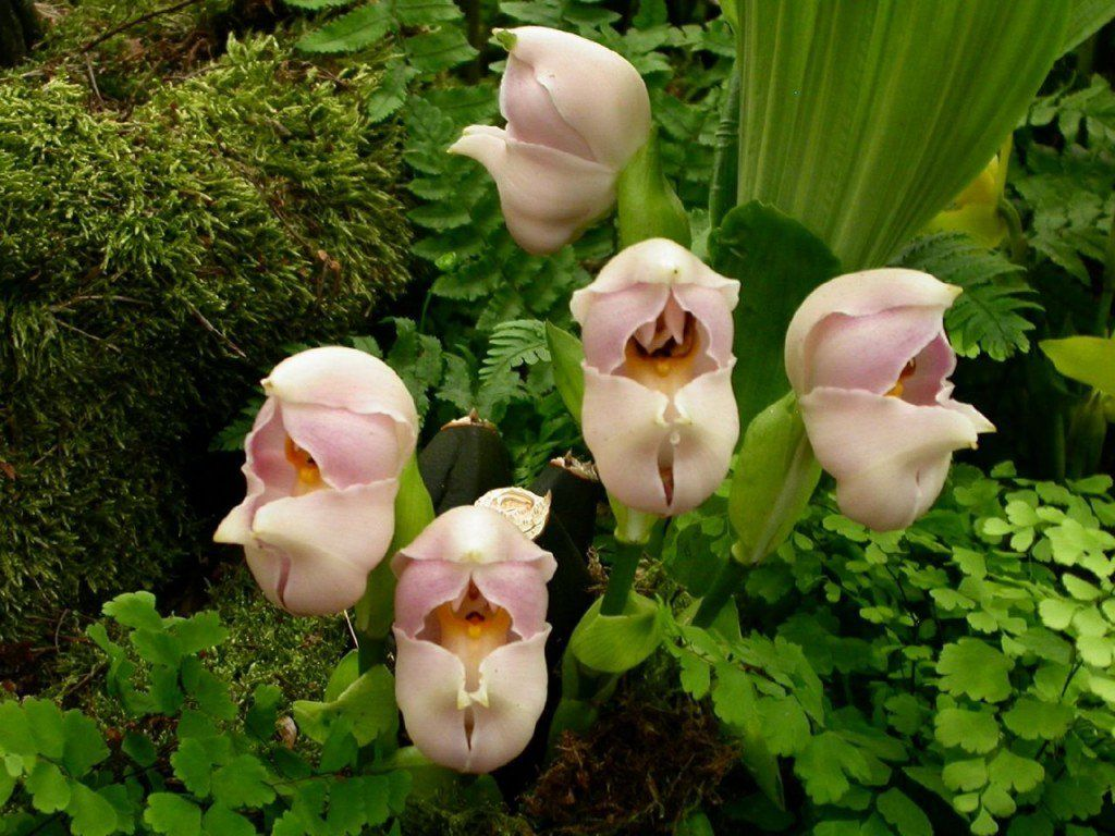 15 most bizarre flowers from around the world linkbeef strange 15 most bizarre flowers from around the world linkbeef izmirmasajfo