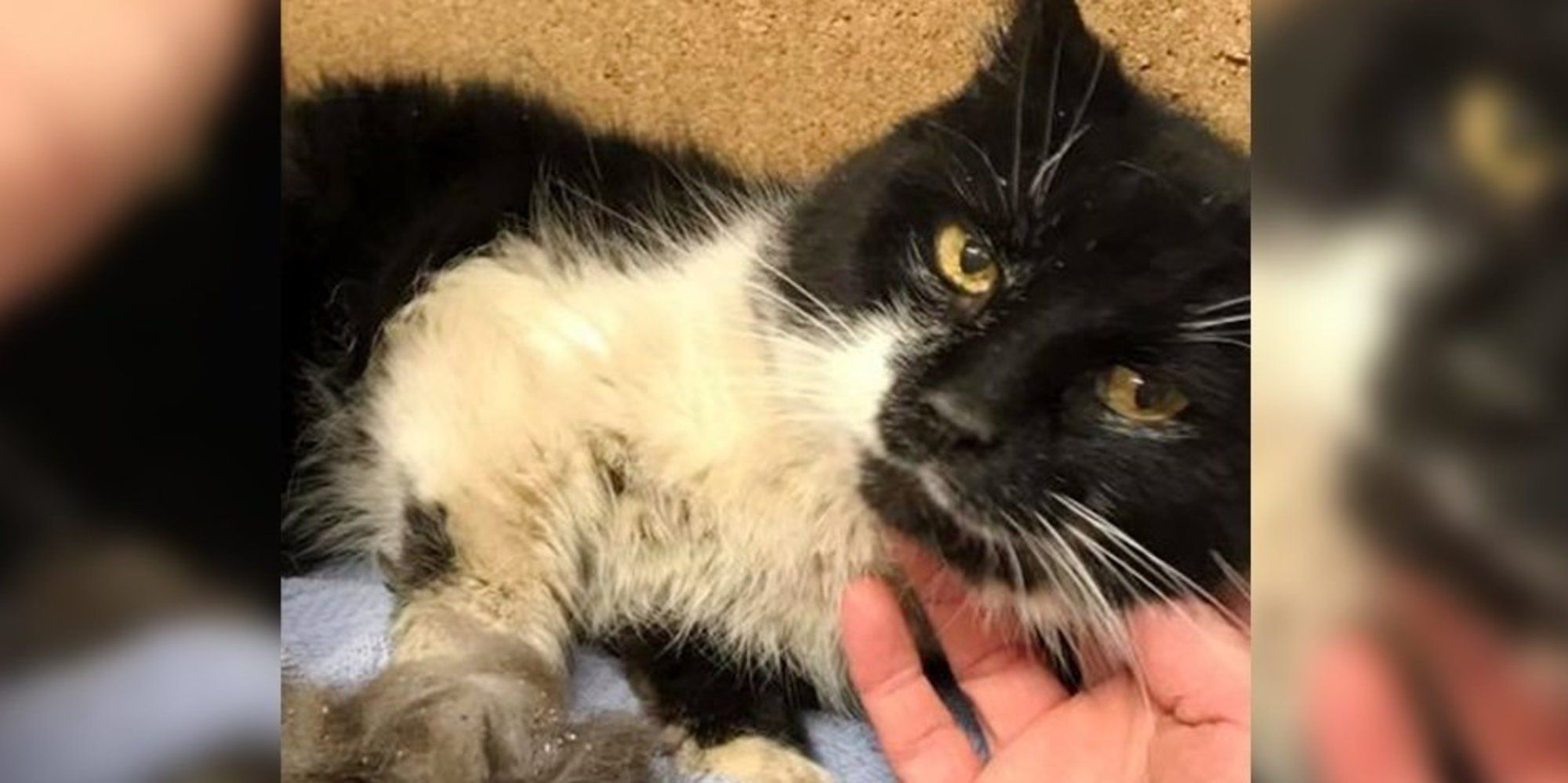 Cat Lived 17 Years In Neglect Finds Someone She Loves And Won T