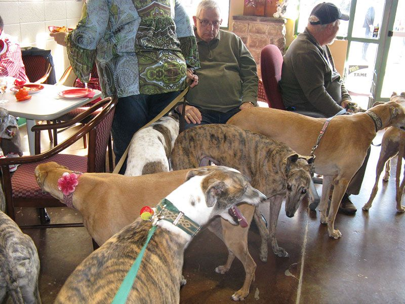 These greyhounds found their forever homes through