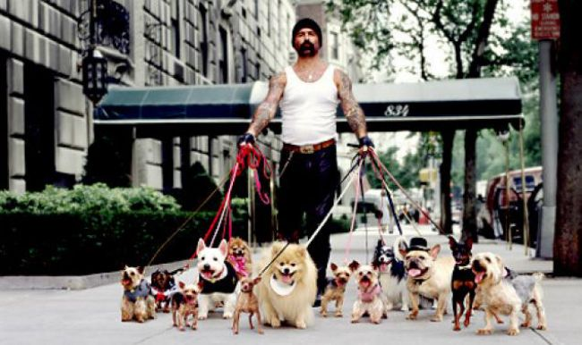 Confessions Of A Dog Walker Dogs Dog Pictures Dog Walking