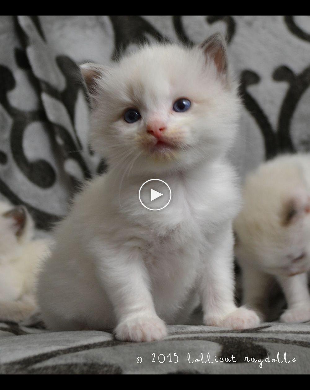 12 Best Resorts In Australia In 2020 Cute Cat Gif Cute Animals Kitten Meowing
