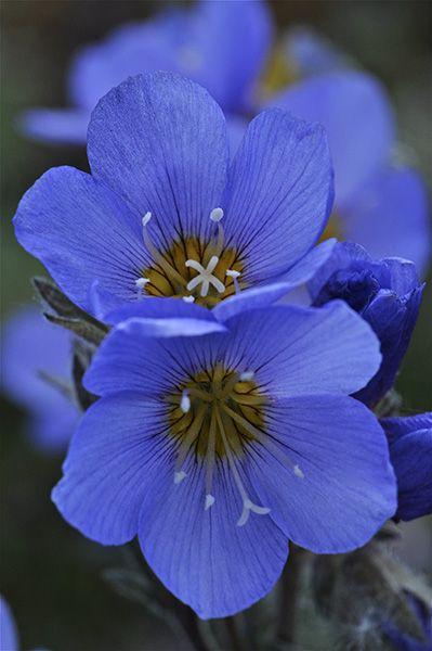 rare endangered flowers rarespeciesendangeredplants