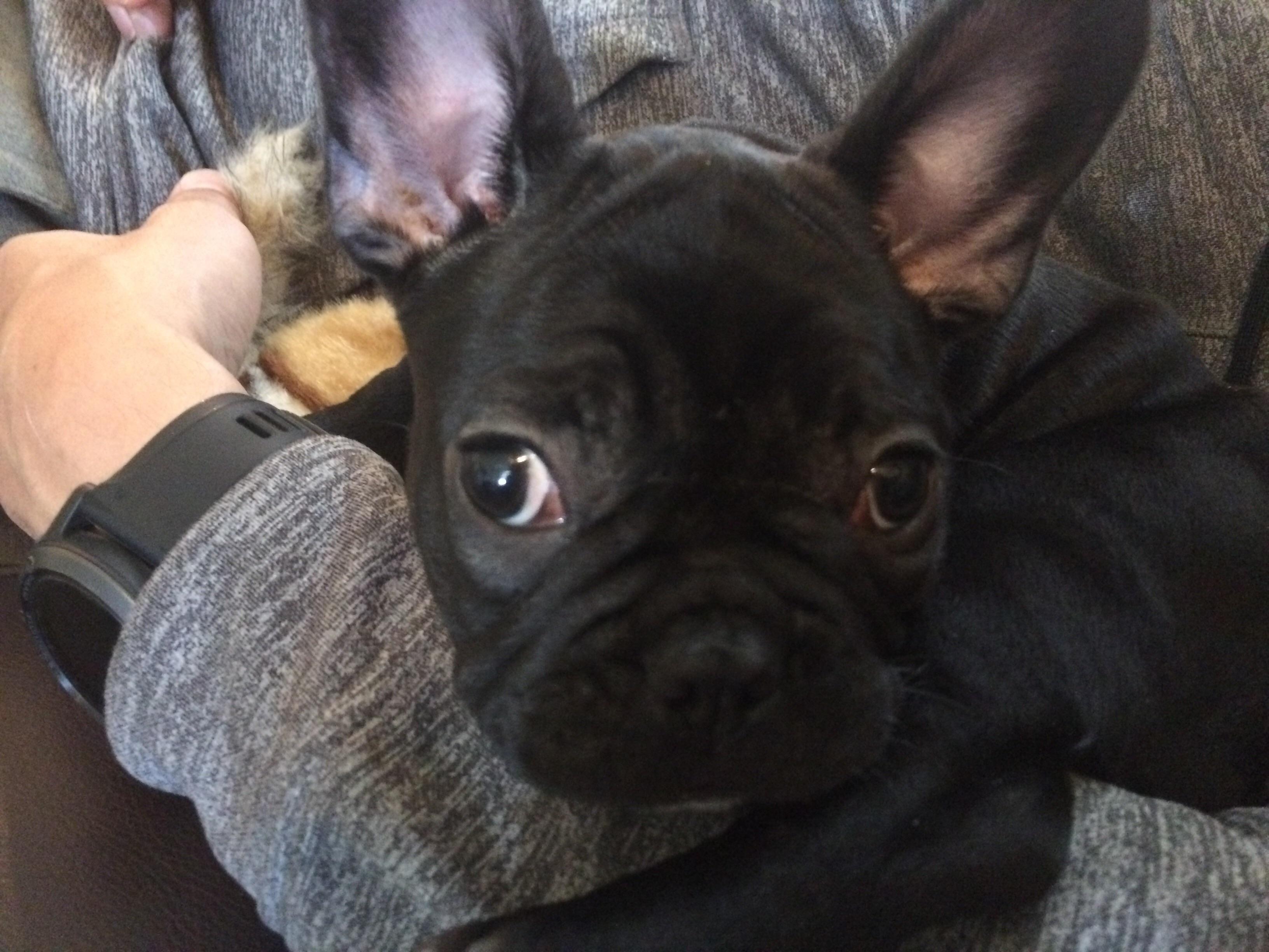 Reddit meet Mimi! http://ift.tt/2r55xIB