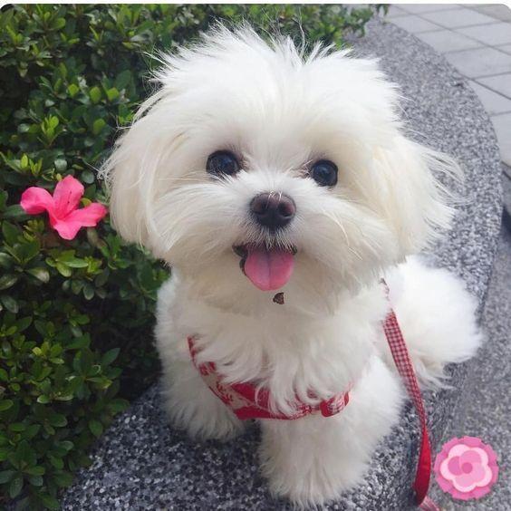 Photo of ¡27 cachorros con las mejores sonrisas en Internet!