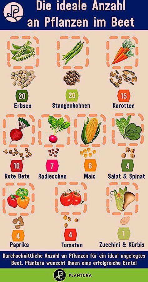 Hochbeet bepflanzen: Pflanzplan, Mischkultur & Gründüngung